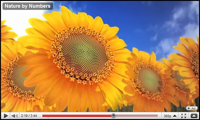 Nature by Numbers, sunflowers