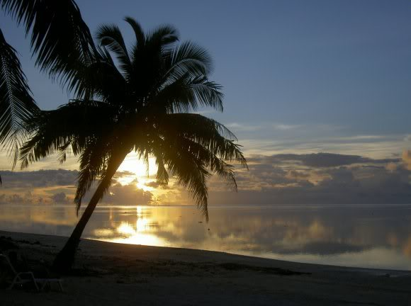 Picture of sunset behind palm tree