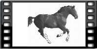Picture of running horse in movie frame
