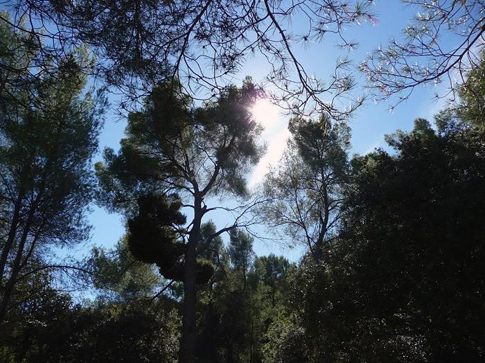 Trees on the Bibemus Plateau