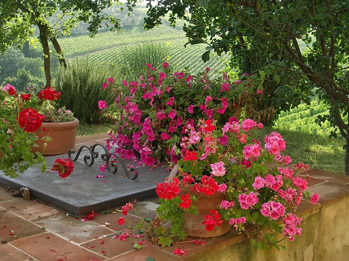 Picture of flowers on villa wall in Tuscany