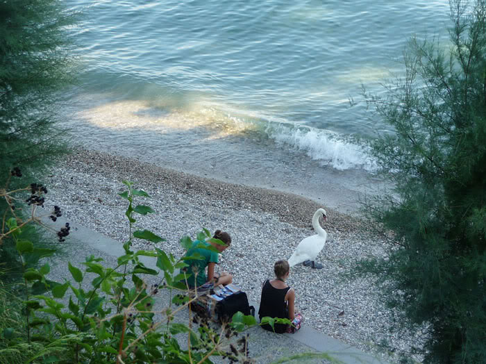 People and swan on beach near Sirmione castle, evening